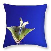 Luna Moth In Flight Throw Pillow