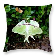 Luna Moths' Afternoon Delight Throw Pillow