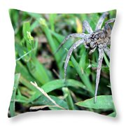 Lurking Spider In The Grass Throw Pillow