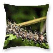 Lymantria Dispar Gypsy Moth Larva Throw Pillow