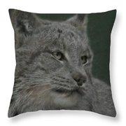Lynx Painterly Throw Pillow