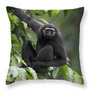 M�llers Bornean Gibbon Hylobates Throw Pillow