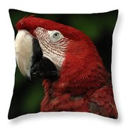 Macaw In Red Throw Pillow