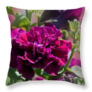 Maco Petunia Flower Double Burgundy Madness Art Prints Throw Pillow