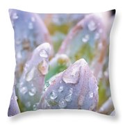 Macro Succulent With Droplets Throw Pillow