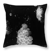 Macrophages Interacting With Lymphocytes Throw Pillow