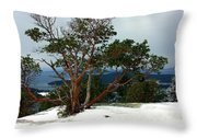 Madrone On Young Hill Throw Pillow