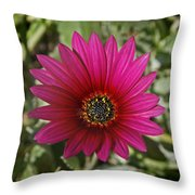 Magenta In Your Face Throw Pillow