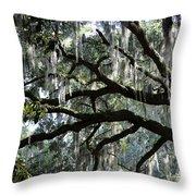 Magnolia Meets Live Oak Throw Pillow