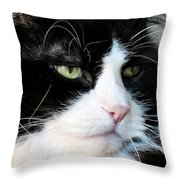 Maine Coon Face Throw Pillow