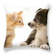 Maine Coon Kitten And Mongrel Dog Throw Pillow