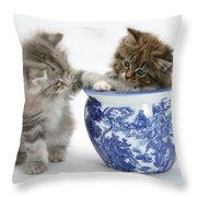 Maine Coon Kittens Throw Pillow