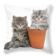 Maine Coon Kitttens Throw Pillow