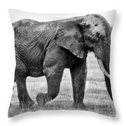 Majestic African Elephant Throw Pillow