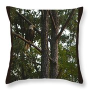 Majestic Bald Eagle Throw Pillow