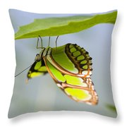 Malachite Butterfly On Leaf Throw Pillow