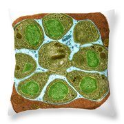 Malaria Parasite In Blood Cell, Tem Throw Pillow