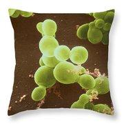 Malassezia Furfur Throw Pillow