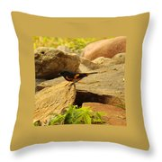 Male American Redstart On The Rocks Throw Pillow