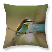 Male Bee Eater Leaves Perch To Find Throw Pillow