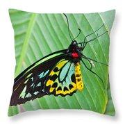 Male Cairns-birdwing Butterfly Throw Pillow