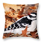 Male Downy Woodpecker 4 Throw Pillow