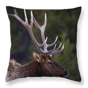 Male Elk Cervus Canadensis Throw Pillow