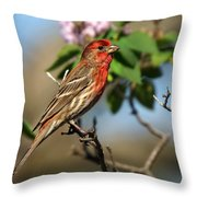 Male Finch Throw Pillow