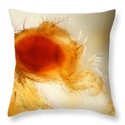 Male Fruit Fly Throw Pillow