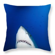 Male Great White Shark Showing Teeth Throw Pillow