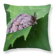 Male Gypsy Moth  Throw Pillow
