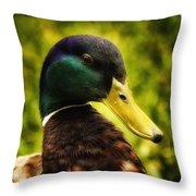 Male Mallard Duck Throw Pillow