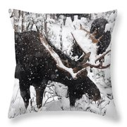 Male Moose Grazing In Snowy Forest Throw Pillow