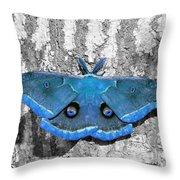 Male Moth Light Blue Throw Pillow