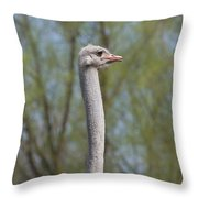 Male Ostrich Throw Pillow
