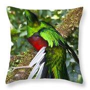 Male Resplendent Quetzal Throw Pillow