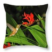 Male Rufous Hummingbird Throw Pillow