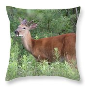 Male White Tailed Deer In A Spring Meadow Throw Pillow