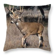 Male White-tailed Deer Throw Pillow