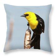 Male Yellow-headed Blackbird Throw Pillow