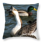 Mallard And Chinese Swan Goose - Anser Cygnoides - Featured In Wildlife Group Throw Pillow