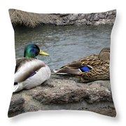 Mallard Duck Couple Throw Pillow