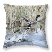 Mallard Duck Flying Throw Pillow