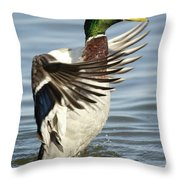 Mallard Duck Having A Flapping Good Time Throw Pillow