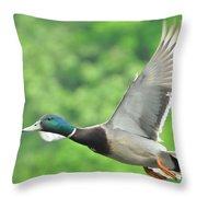 Mallard Duck In Flight Throw Pillow