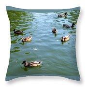 Mallard Ducks Throw Pillow