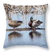 Mallard Ducks Sitting On A Sandbar  Throw Pillow