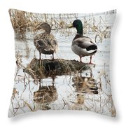 Mallard Ducks Standing On A Rock Throw Pillow