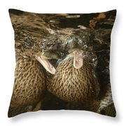 Mallard Ducks Underwater Throw Pillow