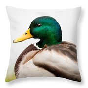 Mallard Throw Pillow